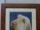 dog spinone pastel