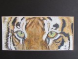 Tiger, big cat, Acrylics