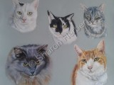 Pastel, cats,