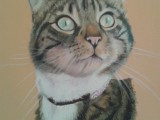 Cat, pastel, painting, commission
