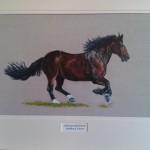 Welsh cob horse