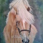 pony welsh stallion palomino