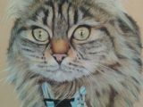 Cat, pastel, painting, Maine Coon